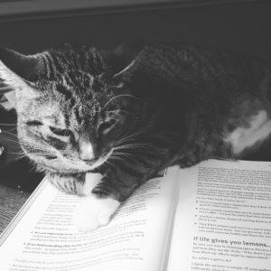 cat book 2