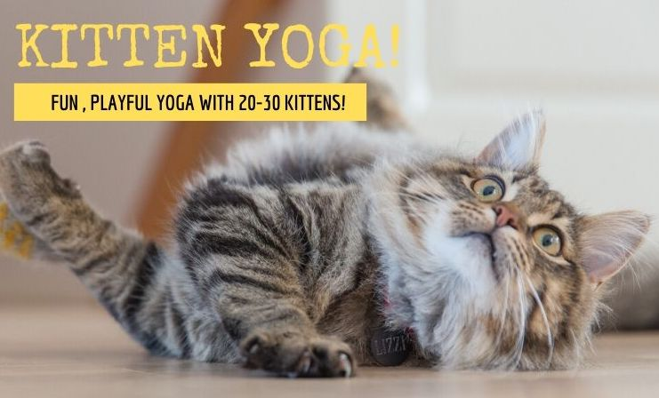 Copy of Kitten Yoga