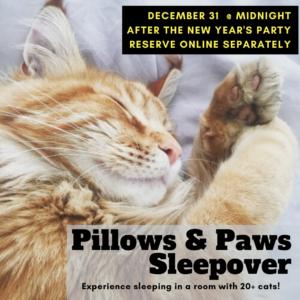 Pillows & Paws